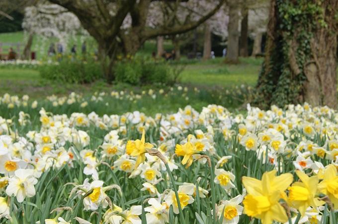 Kevät Luxissa.jpg